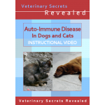 Autoimmune Disease in Dogs And Cats (Video)