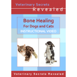 Bone Healing for Dogs and Cats (Video)