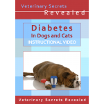 Diabetes in Dogs And Cats (Video)
