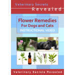 Flower Remedies For Dogs And Cats (Video)