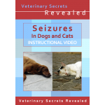 Seizures in Dogs and Cats (Video)